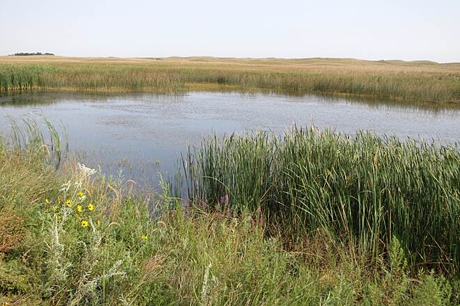 Cowboy Recreation and Nature Trail Pond Pond near Valentine, sand hills and cattails