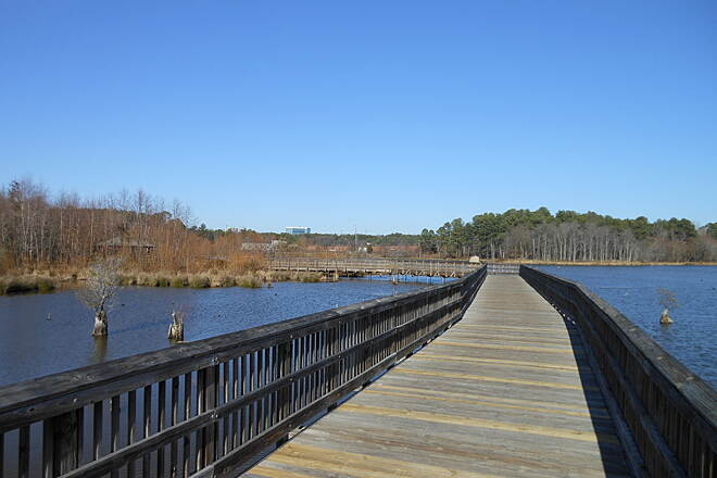 Crabtree Creek Trail Boardwalk section near Raleigh Blvd.  Biking north along the boardwalk