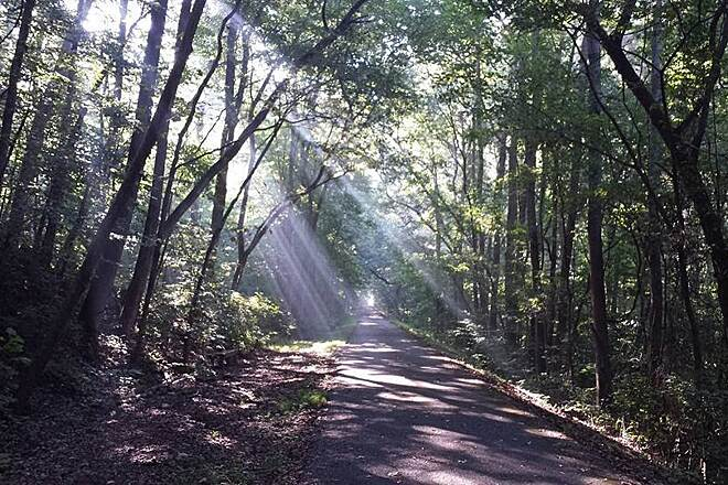 Cumberland River Bicentennial Trail  Late summer sunbeams