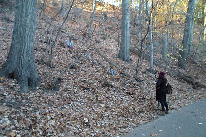 Cynwyd Heritage Trail Cynwyd Heritage Trail This mom was taking a picture of her kids sliding down the hill through the leaves beside the trail. Taken Nov. 2015.