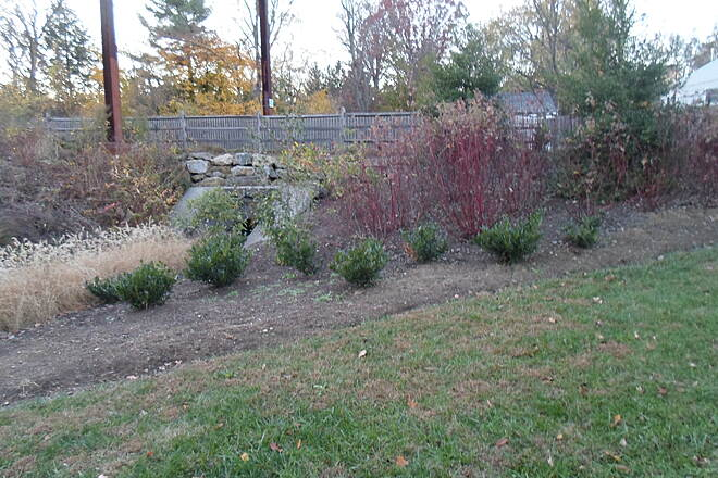 Cynwyd Heritage Trail Cynwyd Heritage Trail Landscaping immediately northeast of the impounded stream off the trail in Lower Merion Twp. Park. The shrubs and flowers are going dormant for winter. Taken Nov. 2015.