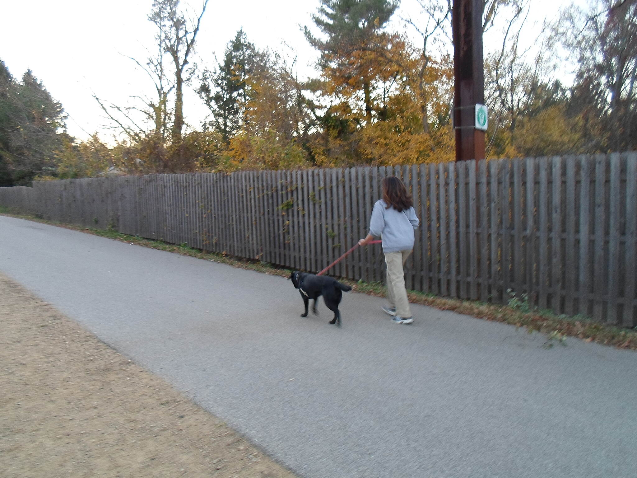 Cynwyd Heritage Trail Cynwyd Heritage Trail Woman and her dog enjoying a stroll near Lower Merion Township Park on a warm autumn evening. Taken Nov. 2015.