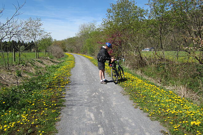 David S. Ammerman Trail (formerly Clearfield to Grampian Trail) Dandelions in May Early May is a good time for ride on this trail. This is near the bridge crossing the West Branch of the Susquehanna River between Clearfield and Curwensville.