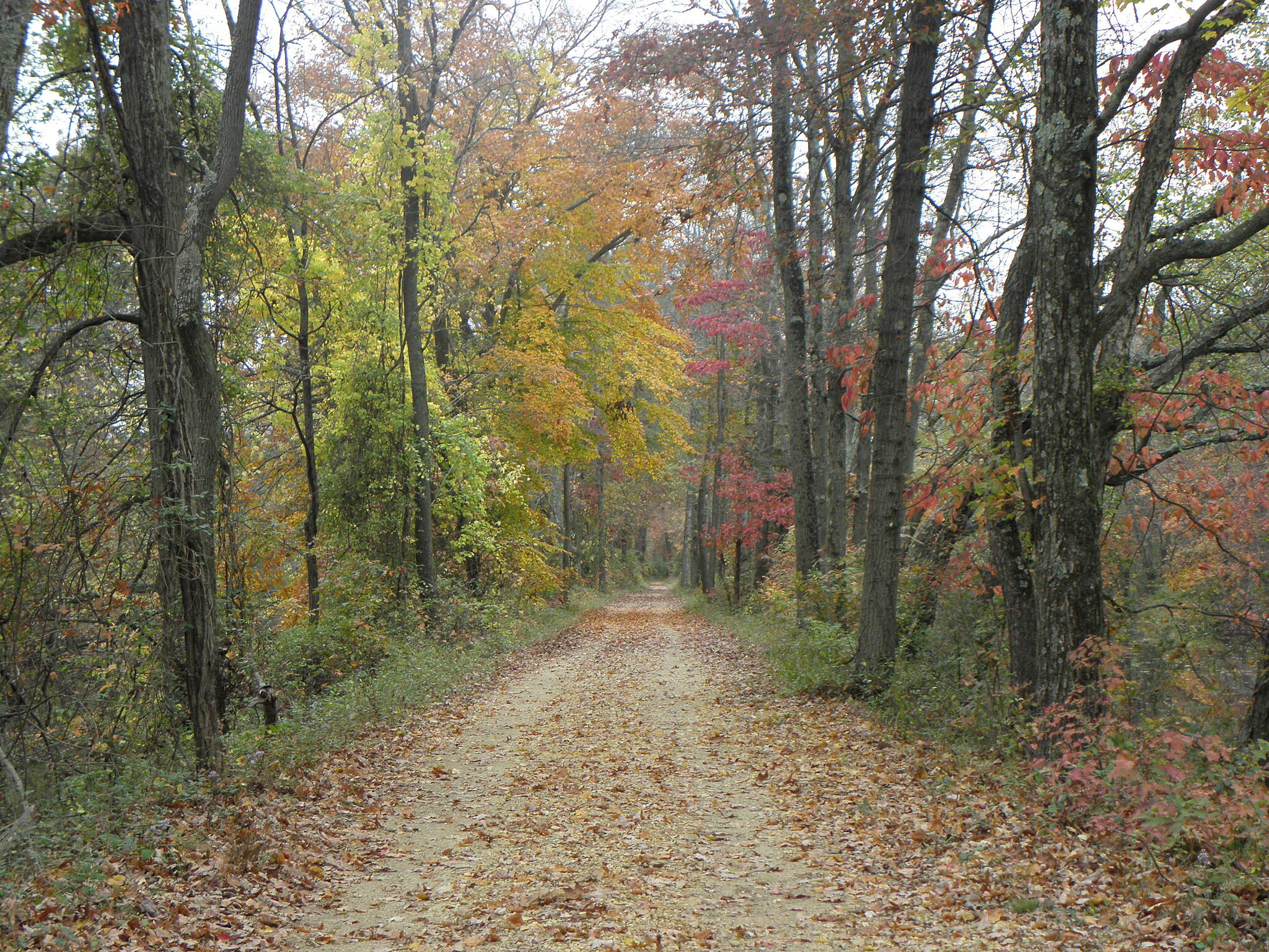 Delaware and Raritan Canal State Park Trail Fall colors on the trail in late October