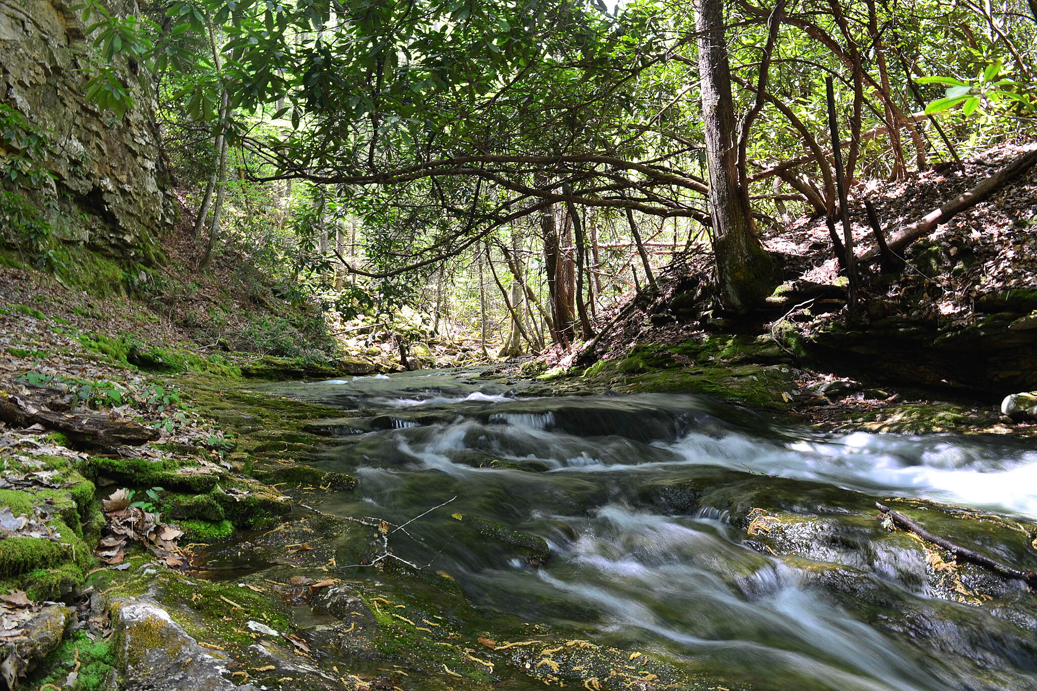 Devil's Fork Loop Trail Stream above the Bathtub