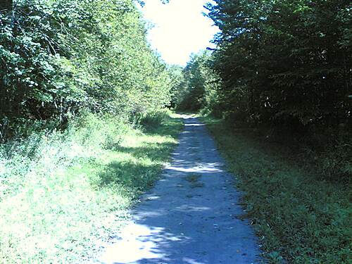 D&H Rail Trail Between Union Dale and Herrick Center - 006 Notice the grass growing in the trail center!