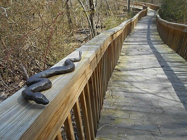 Dick & Willie Passage Rail Trail No, he's not real We encountered this metal snake sculpture on a side trail...nearly jumped off my bike as I rode past him!