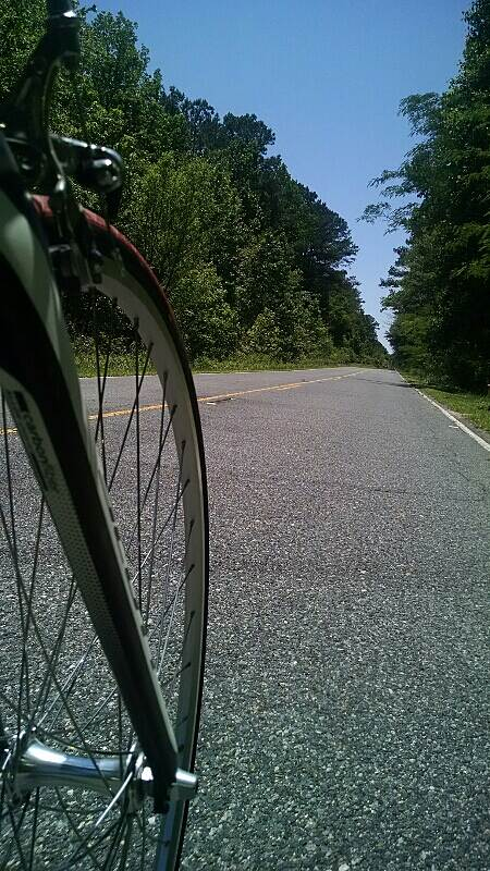 Dismal Swamp Canal Trail (VA) From a fork's perspective Luckily I didn't drop and runover my phone.