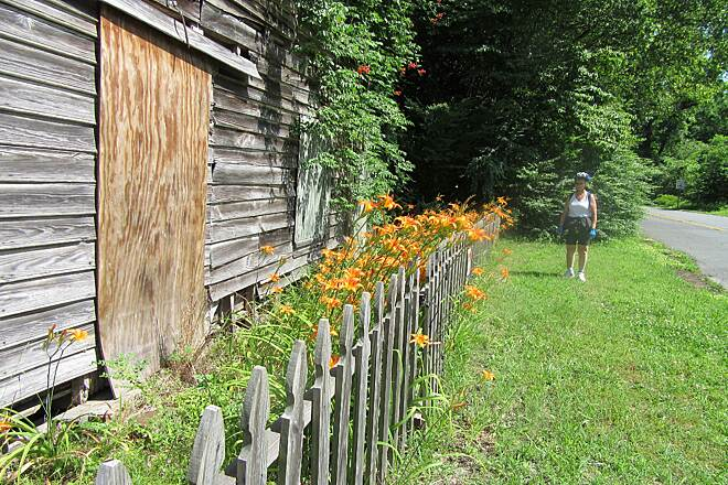 Dismal Swamp Canal Trail (VA) Rustic Scene on Trail