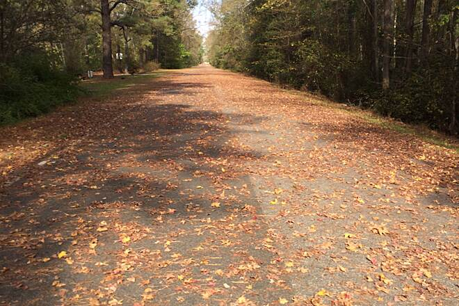 Dismal Swamp Canal Trail (VA) beautiful fall day