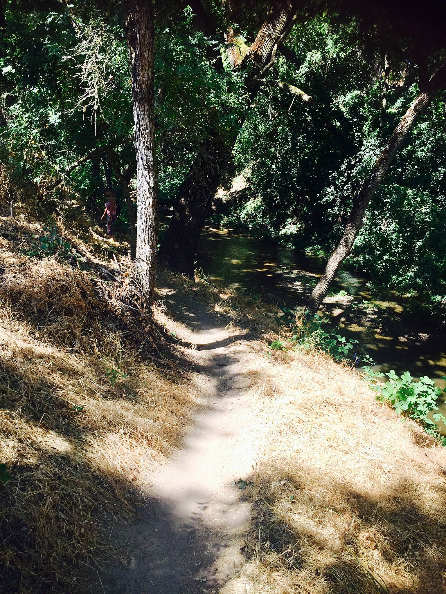 Dry Creek Trail (Modesto) Trail run  Pic I took while doing a trail run with my friend