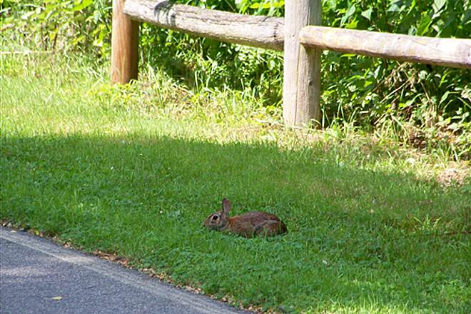 East Bay Bike Path Rabbit on the East Bay