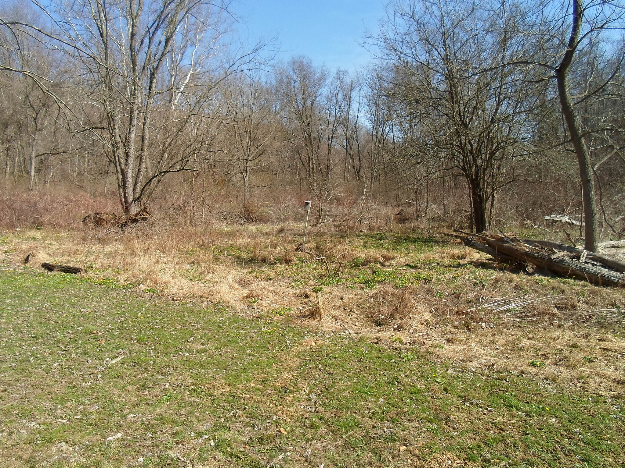East Branch Brandywine Trail East Branch Brandywine Trail Wetlands with birdhouse. Notice the skunk cabbage and other small, green plants emerging. Taken April 2015.