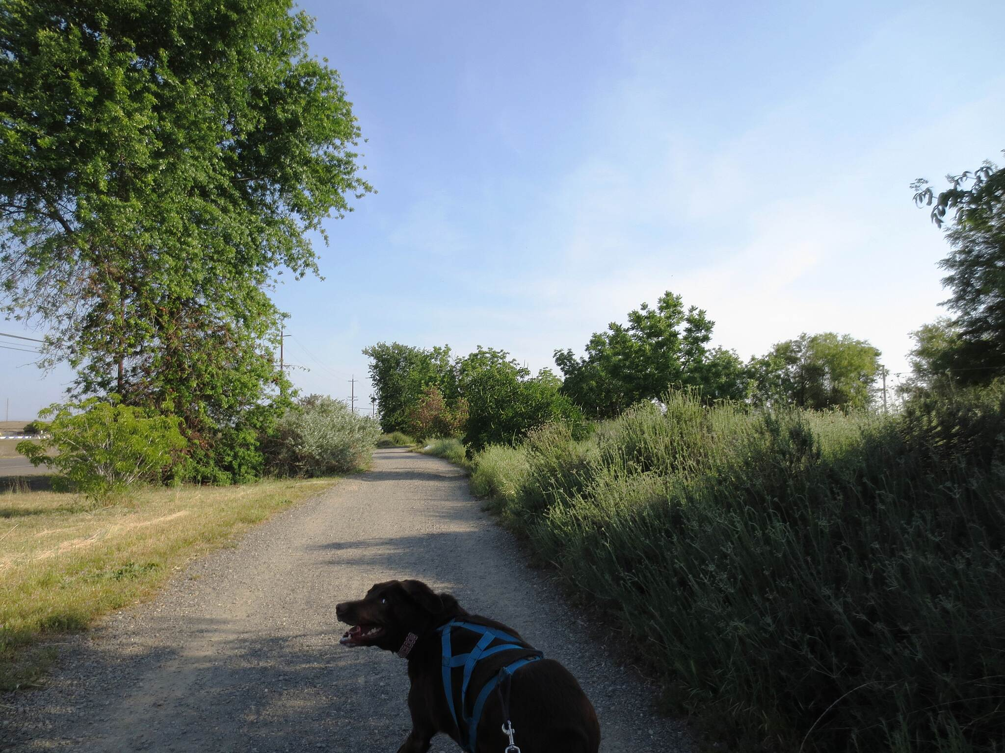 East Davis Greenways Two miles of gravel On street parking is available on Pole Line Rd and Moore Blvd near Sandy Motly Park.  The gravel starts in the northwest corner and continues on the north and east side of Wildhorse Golf Course.  Here my dog is asking 'do we really want to do this?'