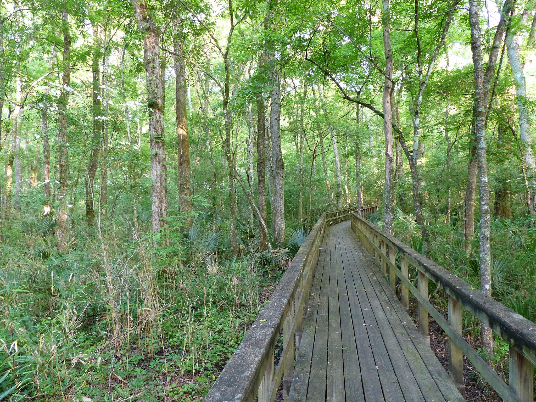 Edisto Nature Trail Edisto Nature Trail Boardwalk