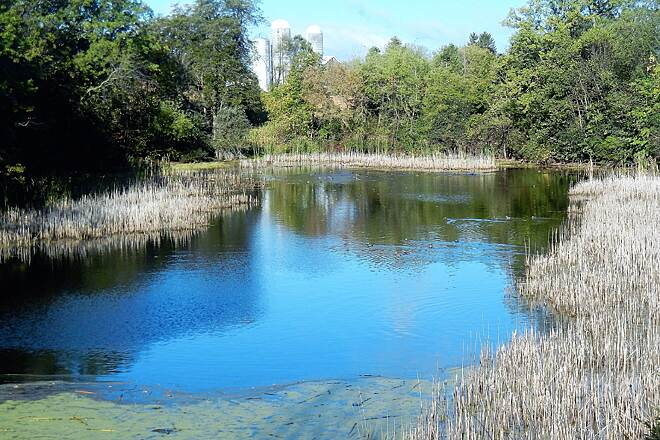 Eisenbahn State Trail Eisenbahn - Mile marker 13 Lots of bird and sub-aquatic life in this pond.