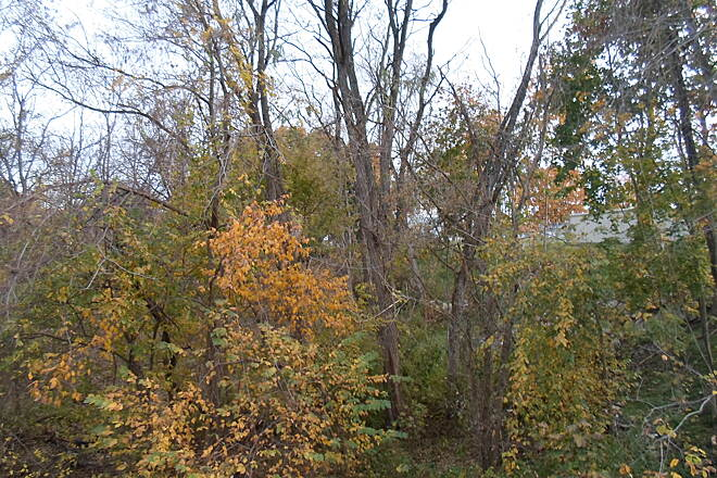 Elizabethtown Connector Trail Elizabethtown Connector Trail The banks of the Conoy Creek are wooded; here you can see the various stages of fall foliage on the trees. Taken Oct. 2015.