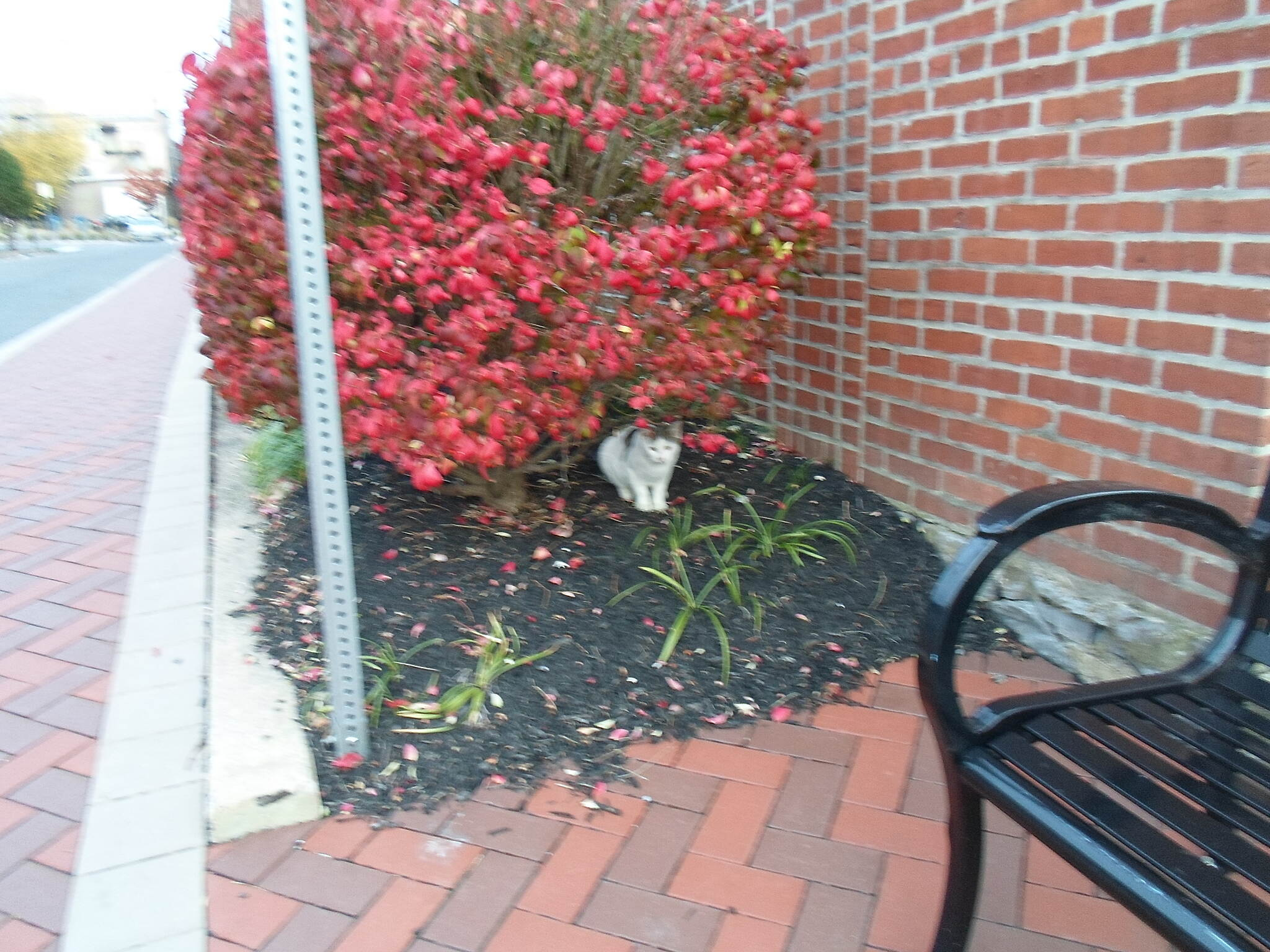 Elizabethtown Connector Trail Elizabethtown Connector Trail This cat was hanging out in the bushes that separate the trail (and Rose Alley) from an apartment building. Taken Oct. 2015.