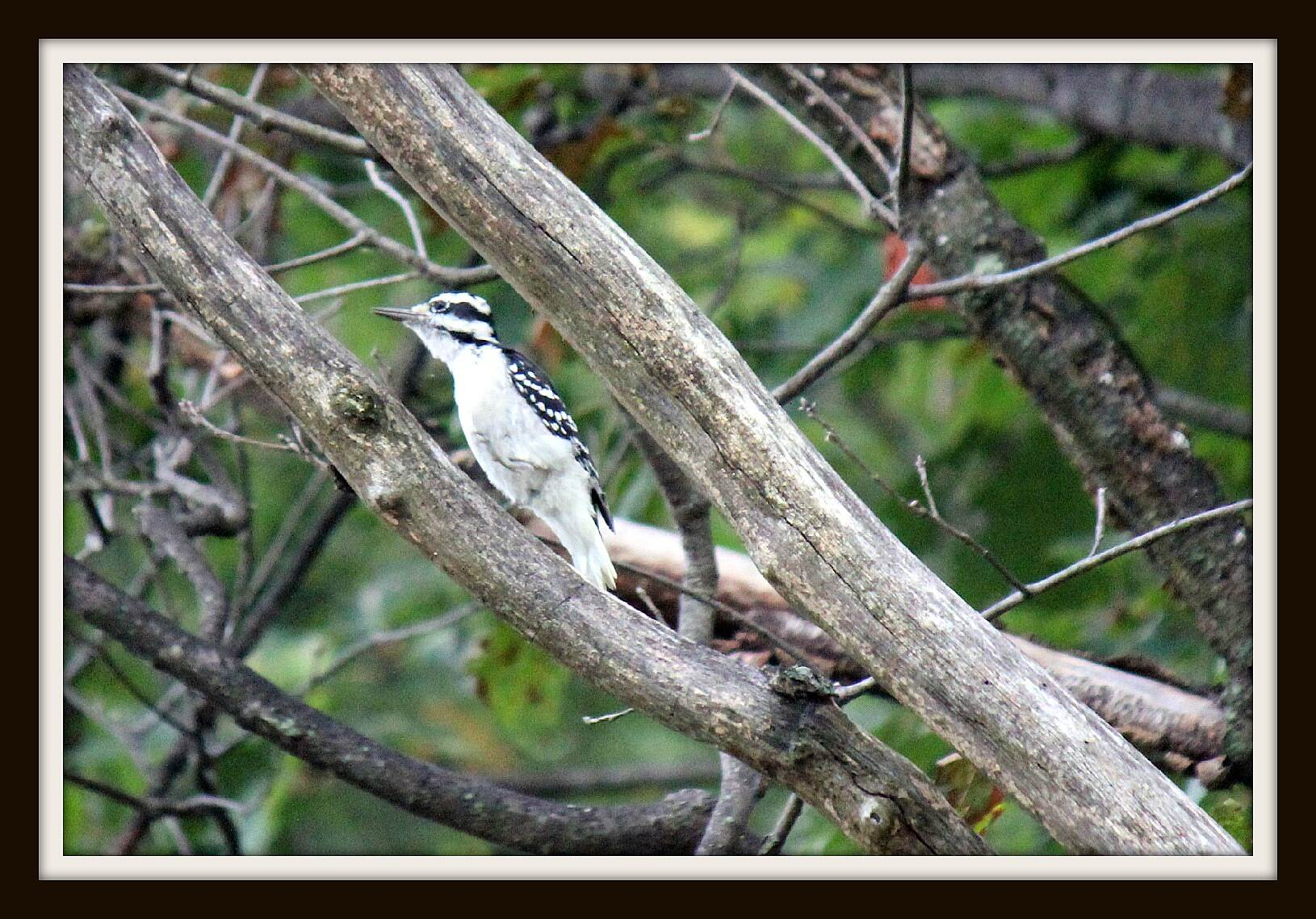 Enola Low Grade Trail STOP--LOOK--LISTEN Your on a rail road bed--- hear a knock? Look up you just might see a Woodpecker!
