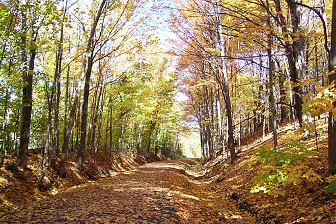 Erie Canalway Trail Foliage Path  Near Forts Ferry Rd pull off