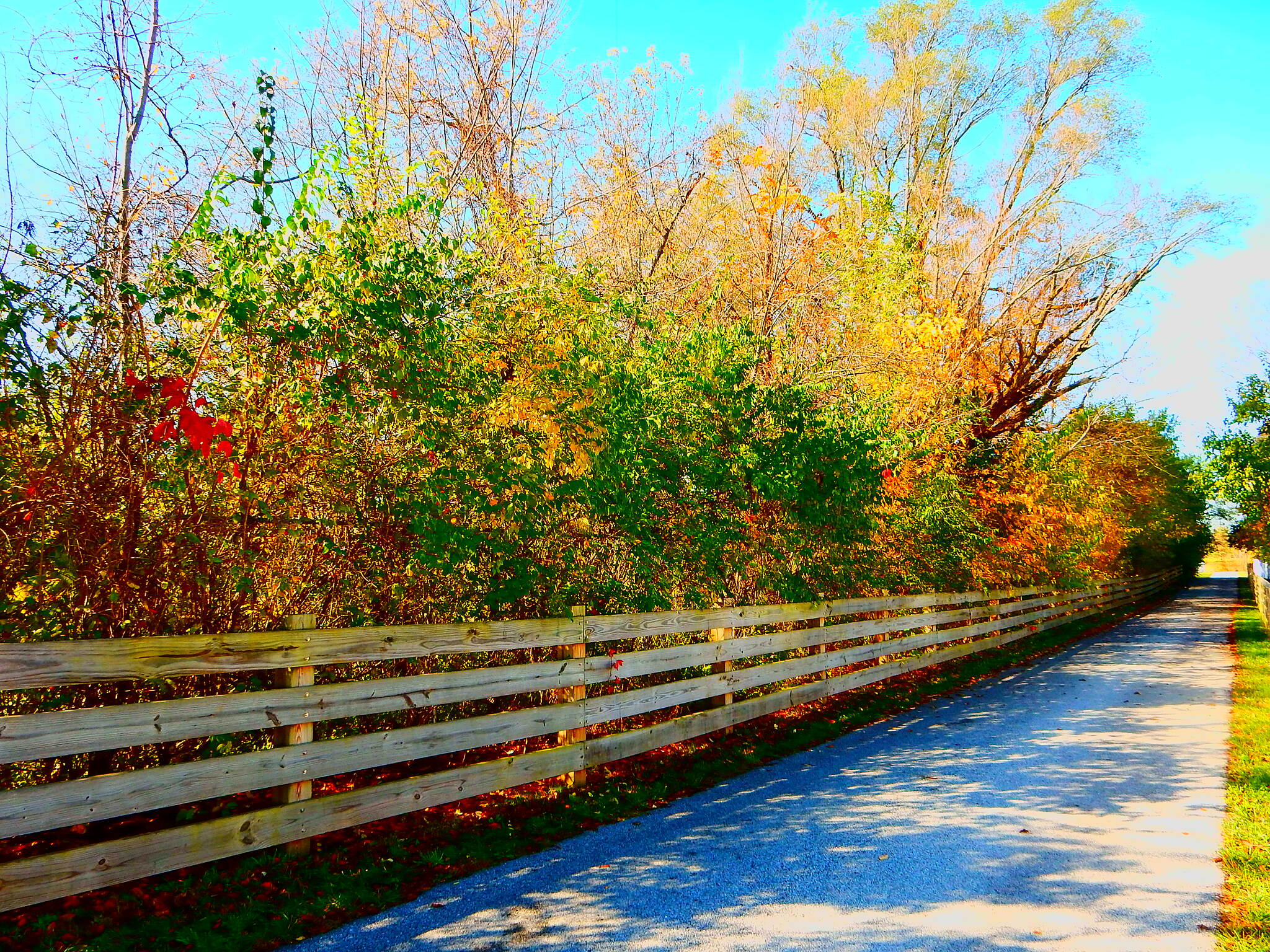 Erie Lackawanna Trail Nice fall day. Taken in the Crown Point area, 11-4-16