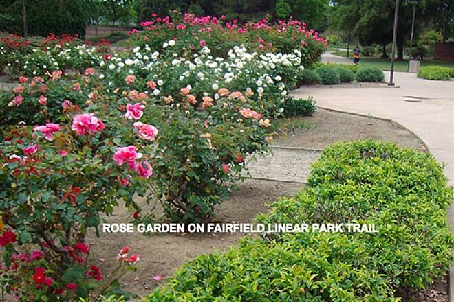 Fairfield Linear Park Fairfield Linear Park Rose Garden