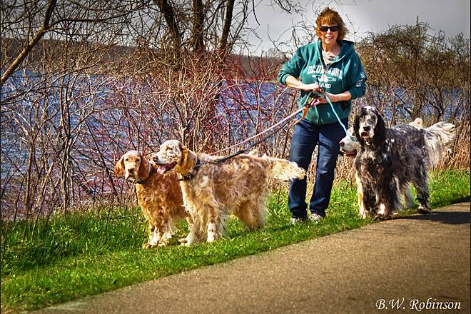 Falling Waters Trail Dog walk along the trail While riding along on our recumbent trikes we passed a lady with her English Setters for a stroll along the trail.