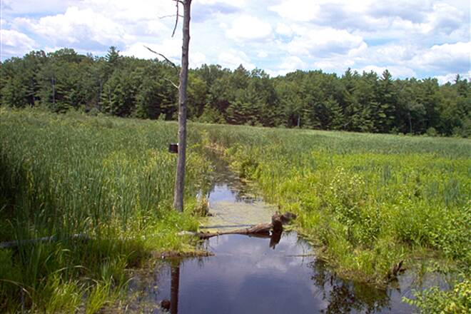 Farmington Canal Heritage Trail Wet land almost at Ma border