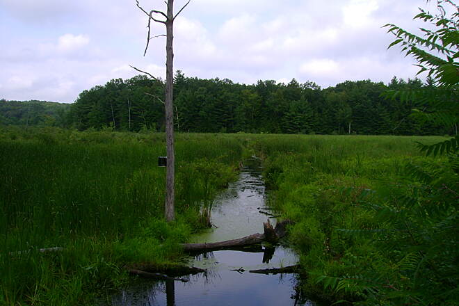 Farmington Canal Heritage Trail East Granby trail View of marshlands from East Granby trail.