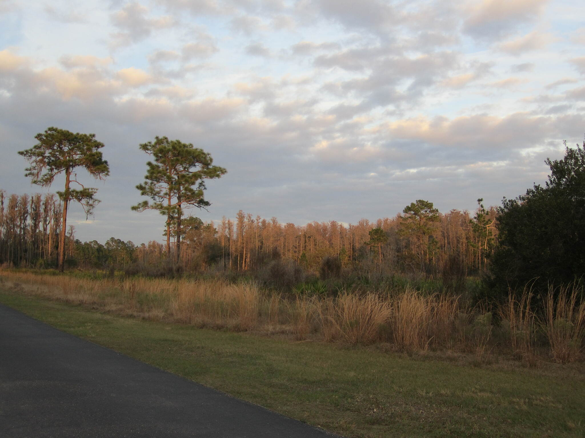 Flatwoods Park Trail sundown