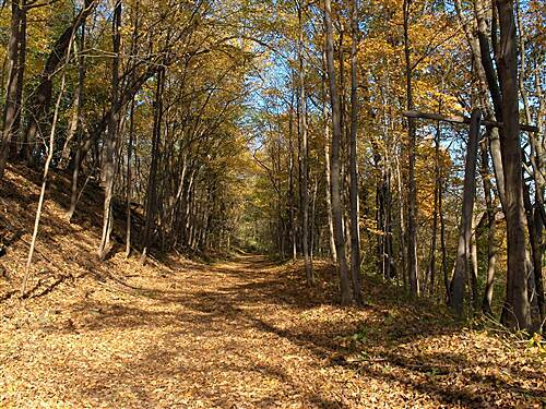 Forks Township Recreation Trail Fall color on the trail View of the trail in the Fall, with an old railroad line pole seen on the right.