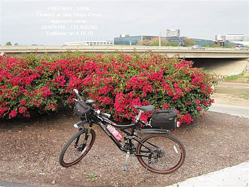 Freeway Trail FREEWAY TRAIL Bougainvillea at the FT x SDCT junction