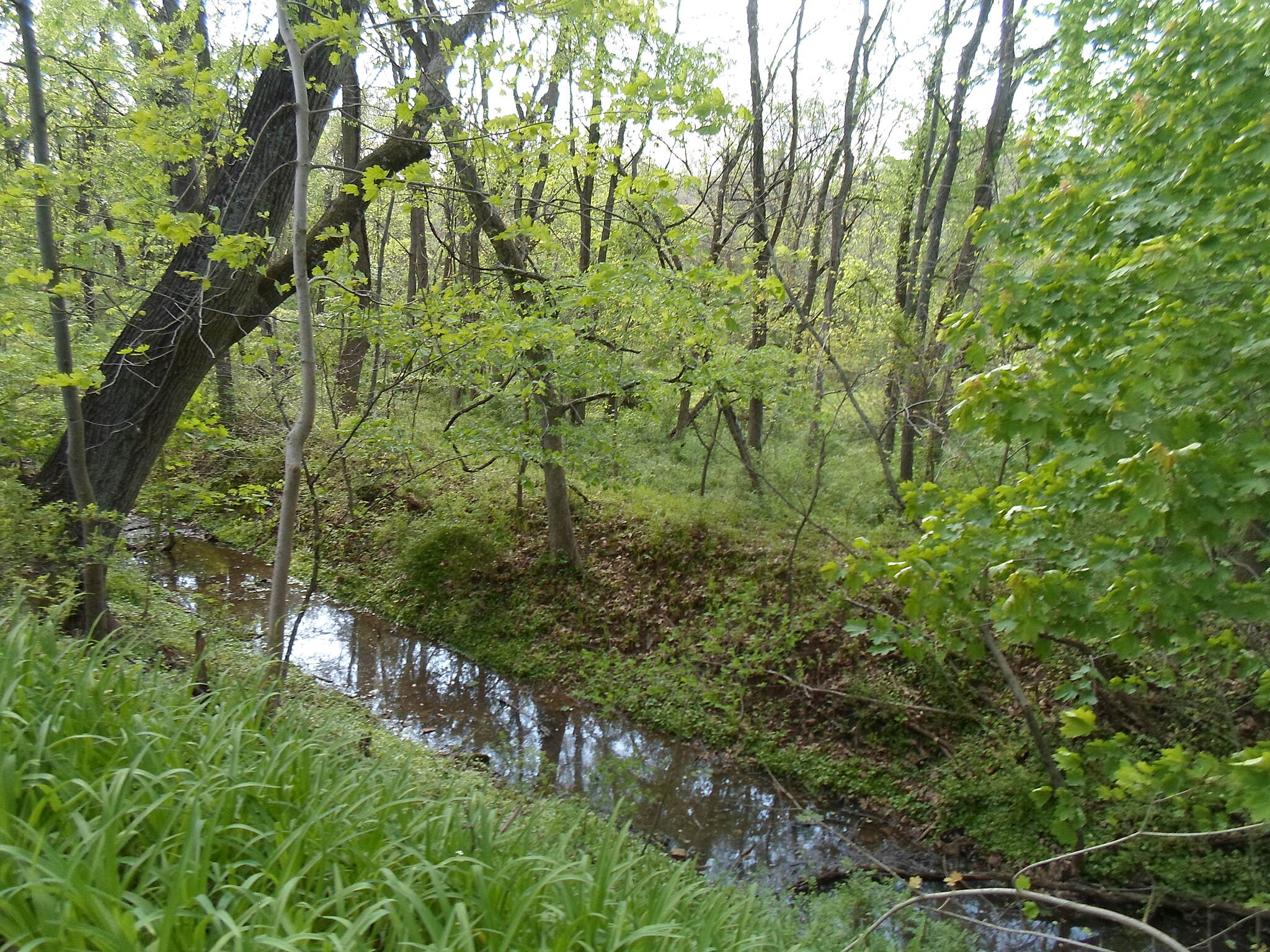 French Creek Trail French Creek Heritage Trail This part of the old mill race was filled with water after spring rainstorms. Taken May 2016.