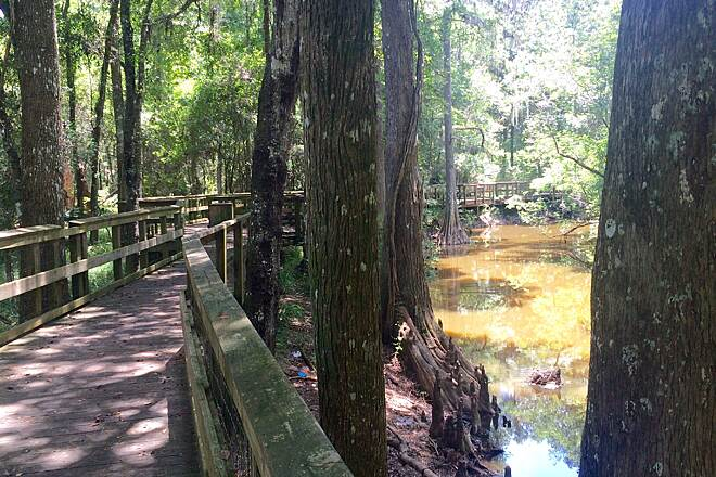 Gainesville-Hawthorne State Park Trail boardwalk in bald cypress swamp