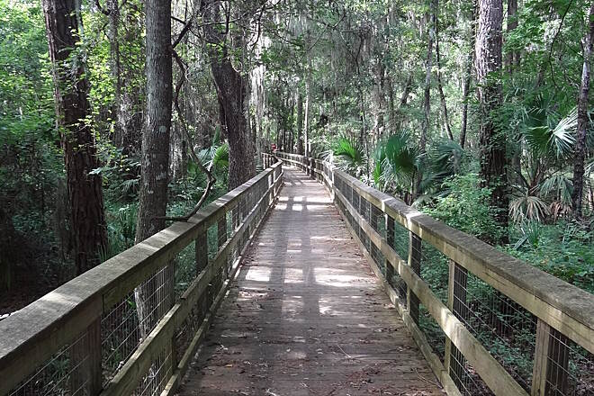 Gainesville-Hawthorne State Park Trail Boardwalk Boardwalk over swamp.