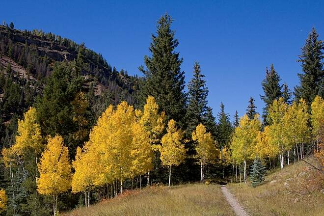 Galloping Goose Trail (CO) Aspen on the trail