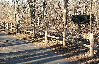 Gary L. Haller Trail Trail Neighbor A trail neighbor grazes in the woods.