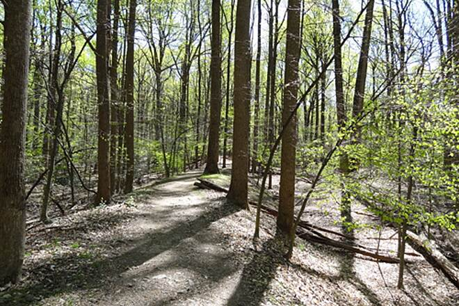 Goldmine Loop Trail Goldmine Loop Trail, April 7, 2012 The start of the trail is a steady climb up from the main area of the C&O Historic Park
