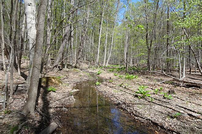 Goldmine Loop Trail Goldmine Loop Trail, April 7, 2012 Green starts to appear in the Maryland woods, and pleasant views can be enjoyed along the Trail