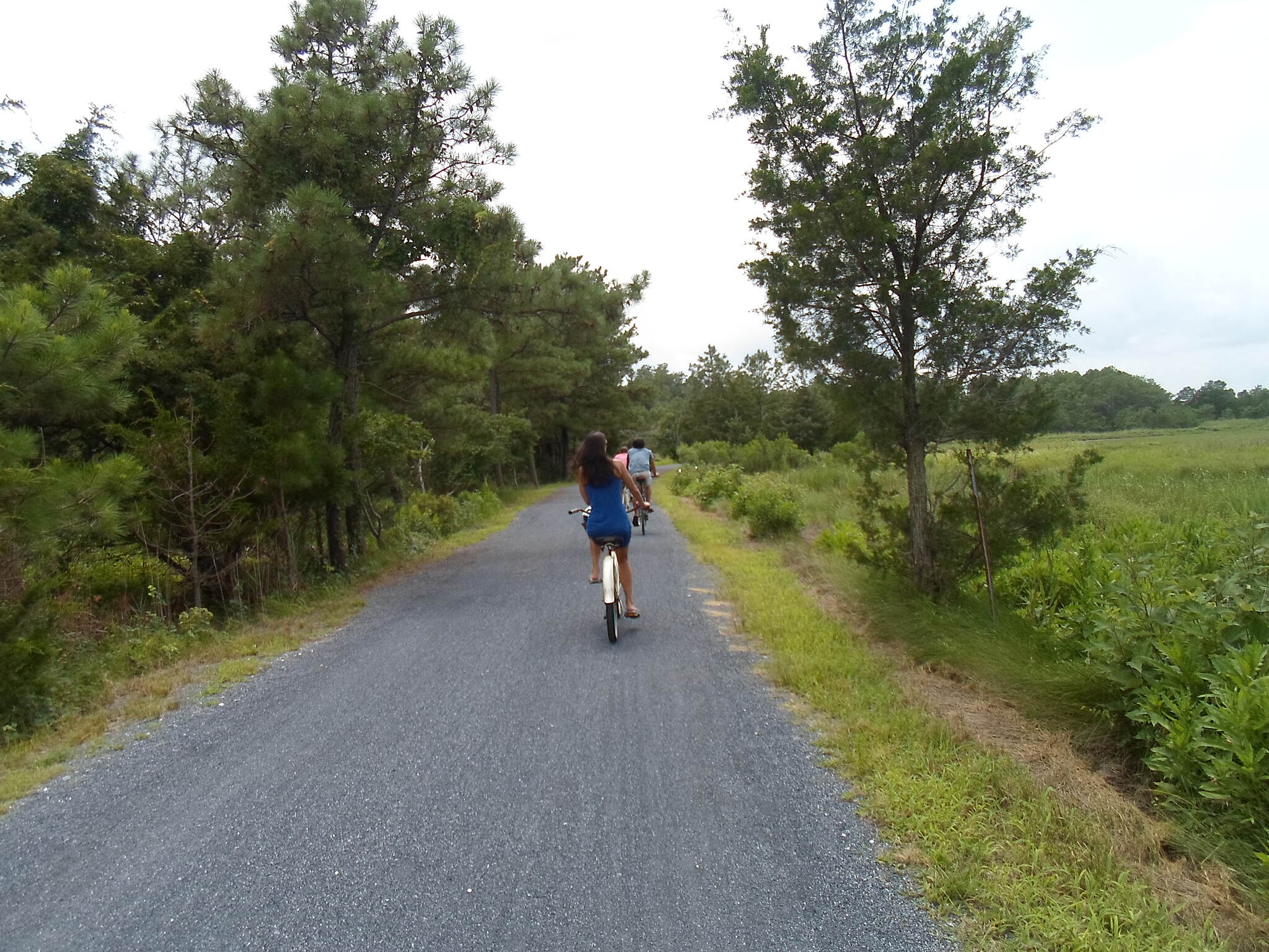 Gordons Pond Trail Gordons Pond Trail More passing cyclists in midsummer. Taken July 2015.
