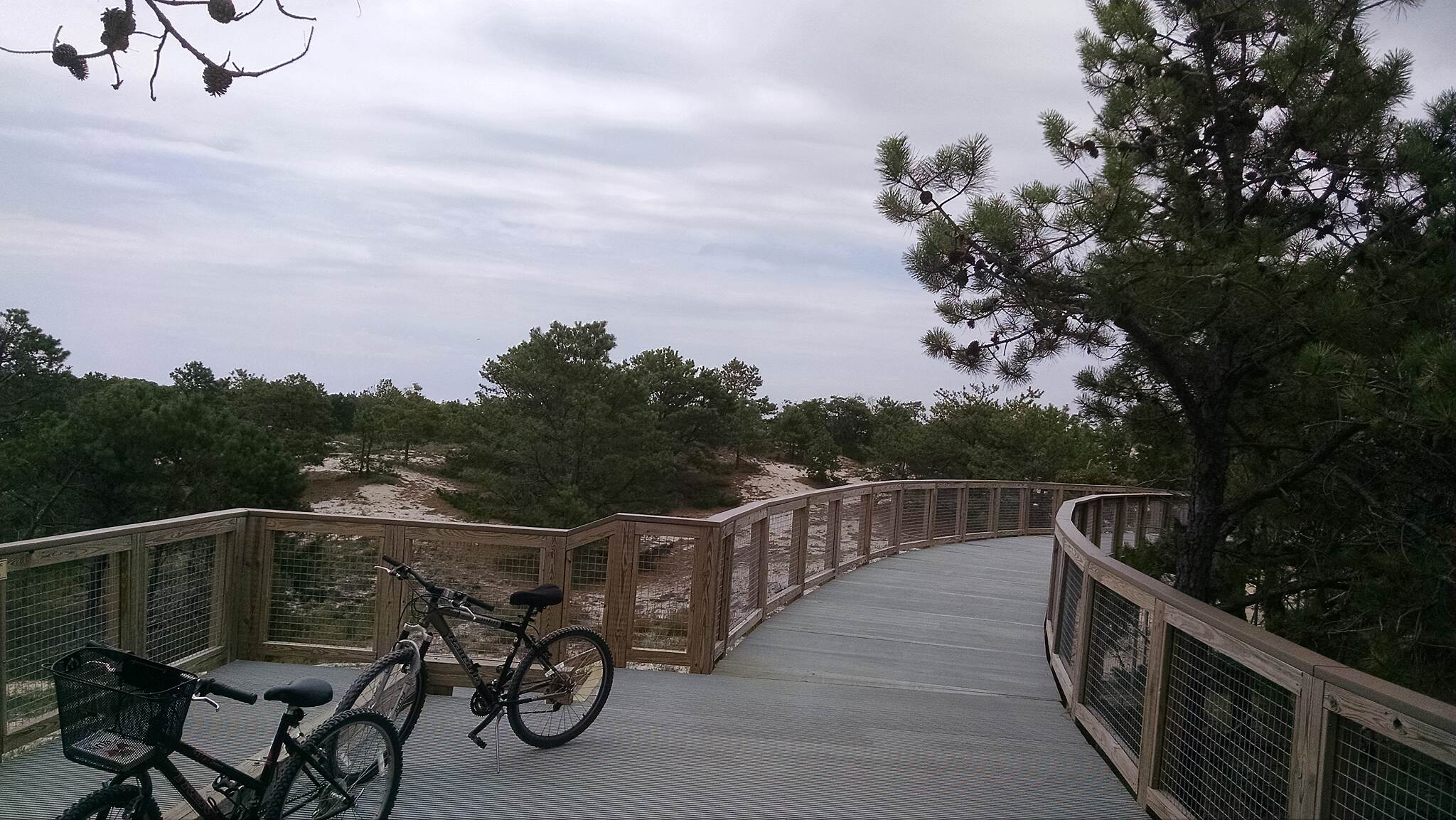 Gordons Pond Trail North end boardwalk Boardwalk over the dunes near Herring Point parking area.