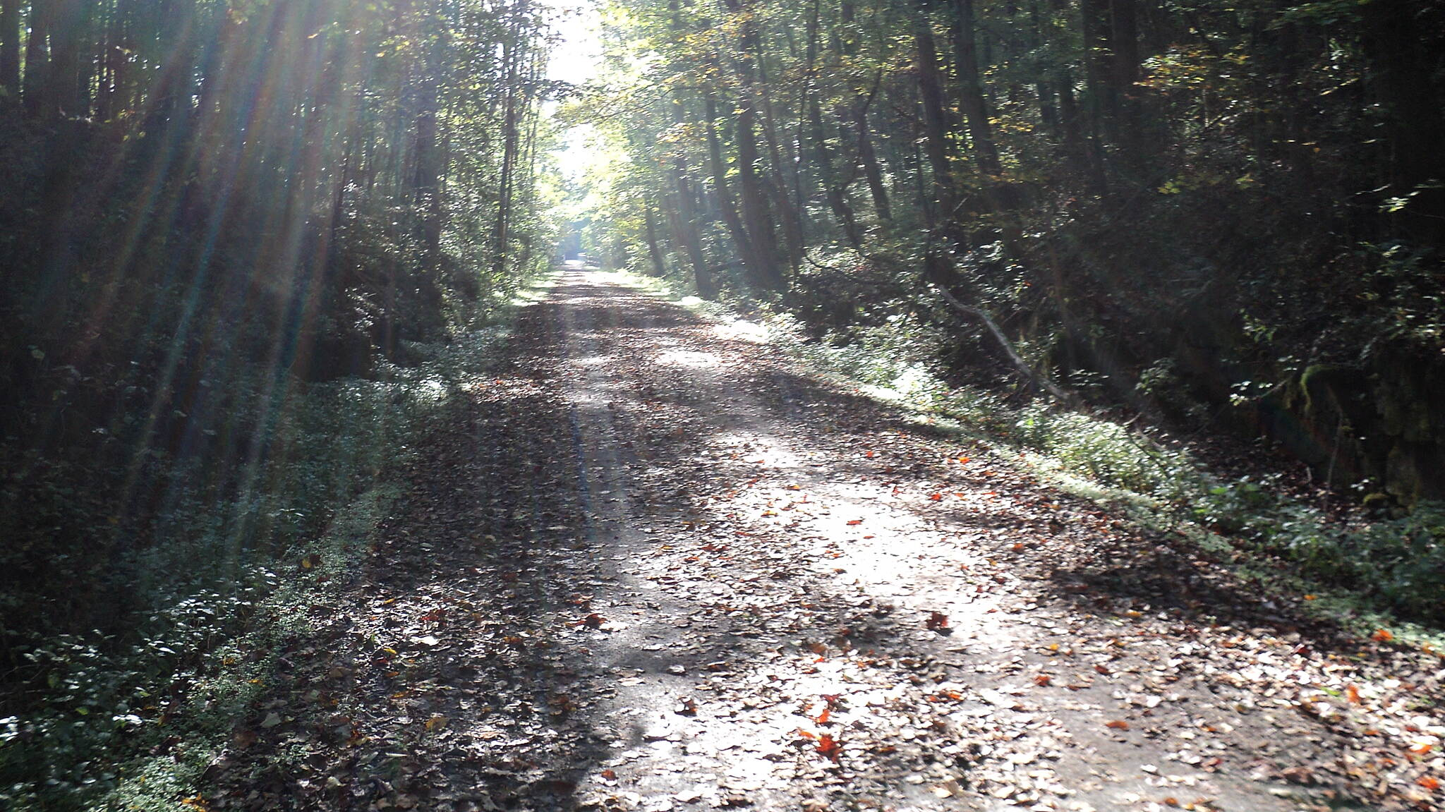 Great Allegheny Passage Autumn Morning Morning on the trail