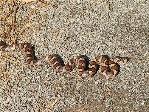 Greater Hazleton Rails to Trails  Snake in the trail