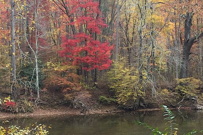 Greenbrier River Trail October 2015 Fall Red Tree between Seebert and Anthony.