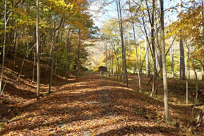 Greenbrier River Trail   October 2011 Beautiful weather & lots of leaves on trail