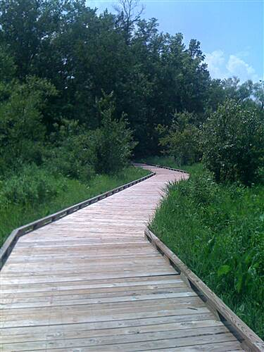 Greenville Health System Swamp Rabbit Trail Decking This is what the trail looks like as it goes through a marshy area near Lake Conastee.