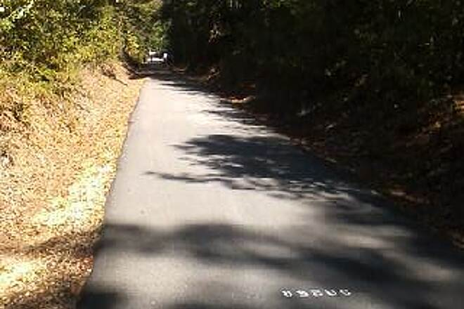 Greenville Health System Swamp Rabbit Trail Shade Much of the Way Trail goes through many wooded areas.