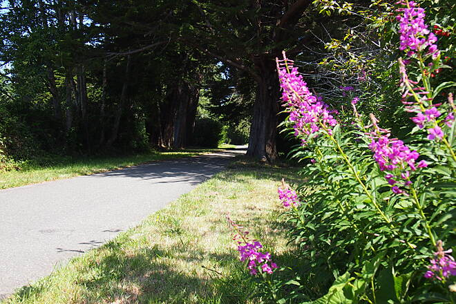 Hammond Trail Trails are healthy Enjoy the peace.  Photo just south of Hiller road taken during a summer month.