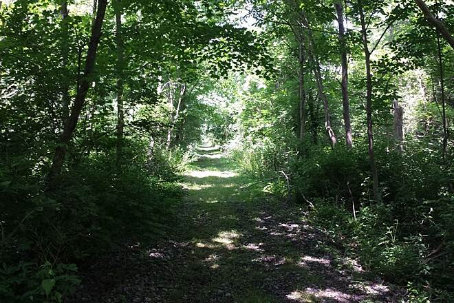 Harlem Valley Rail Trail N. Mountain Road Heading north on the new section of the trail off N. Mountain Road in Copake.