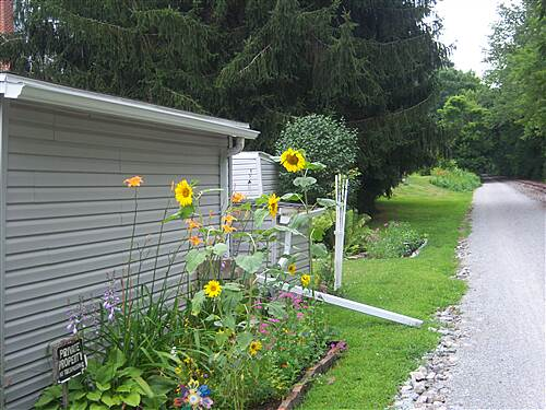 Heritage Rail Trail County Park York County Heritage Rail Trail Sunflowers in Glatfelter's Station